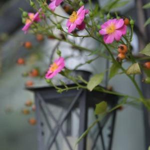 小さな庭の 小さな素敵な秋♪