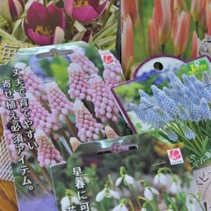 狭い庭で重宝するガーデニンググッズ&春へのお買い物
