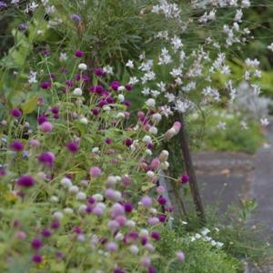 9月の「ローコストでローメンテナンスな花壇」
