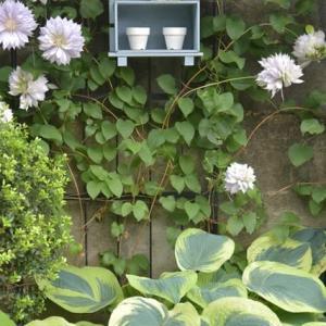 小さな庭宿命の大仕事 鉢の土替えスタート