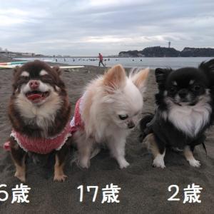 ココウミ恒例、江ノ島かけっこ♪