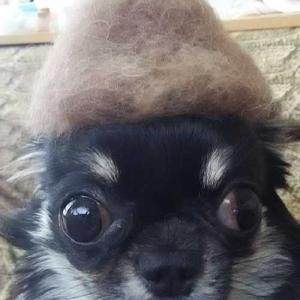 コッコ毛(犬毛)で帽子♪
