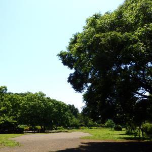 井の頭公園でアーシングとクリーンナップをしよう!
