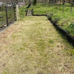 芝生の成長とドッグランへの道…^ ^