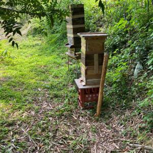 ミツバチの養蜂生活が始まった♬