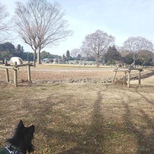 コロナ渦「野田市スポーツ公園」へ