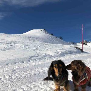雪山の冒険、まだまだ続いてますっ…!!