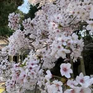 春ですな^ ^