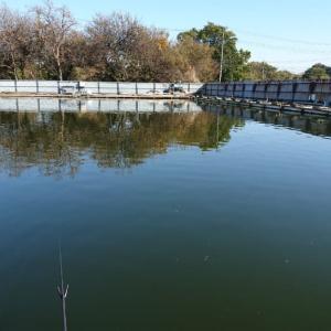 武蔵の池に行ってきた。段底力不足