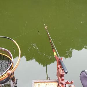 清遊湖に行ってきた。サタデートーナメント