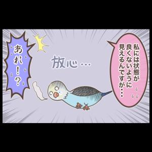 鳥の病院デビュー(1/2)