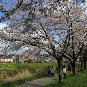山野草が咲きはじめた!