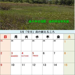 5月のカレンダーできました!