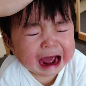 トトロのあるシーンを見て必ず泣く