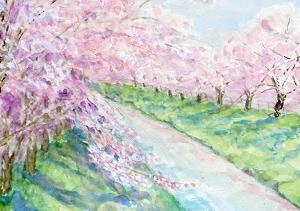 奈良・佐保川の桜