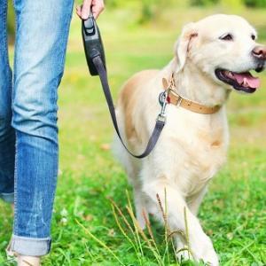 犬を飼っていると心臓発作や脳卒中による死亡リスクが下がる、という研究結果