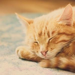 1万年前のネコ「よう人間、メシくれ、ちゃんと養え」