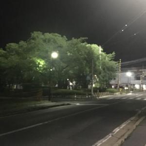 夜ランに見る桜の木