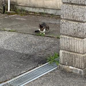 猫さんと一期一会