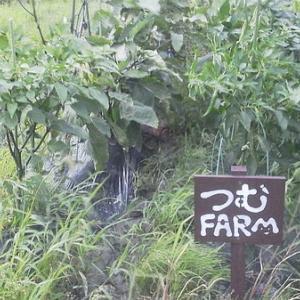 スイカの収穫と木曽川ウナギ 泥がヤバす…