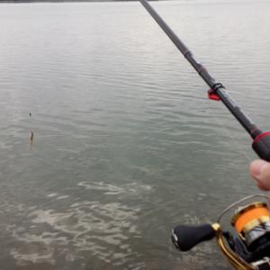 家族でハゼ釣りと短時間「川チニング」