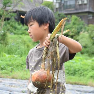 田植え体験と季節の野菜収穫体験