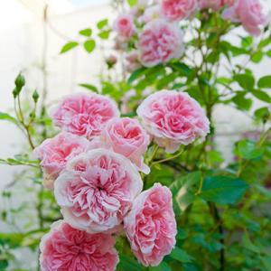 続・春の庭