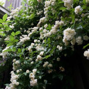 春の庭とゲンロク近況