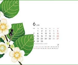 2021年6月カレンダーと分蜂蜂球