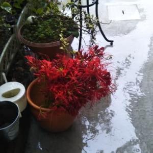 めぐみgardenの秋