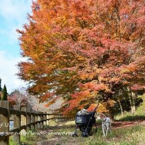 ふたたび公園の秋ふたたび2018。