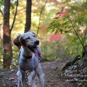 秋色2019 洞川湖から再度公園へ。