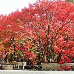 秋色2019 分水嶺越え林道からトゥエンティークロスまで。