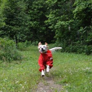 赤い犬と白い花と夏のはじまり。