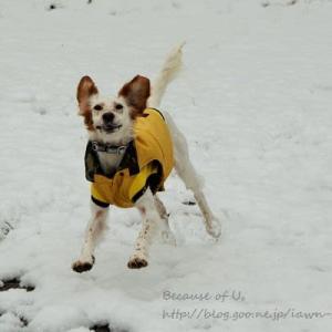 ゆっきと雪遊び。