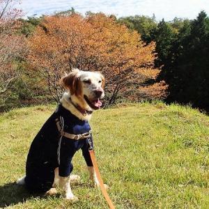 種をはこぶ犬と再度公園あたりの紅葉速報。