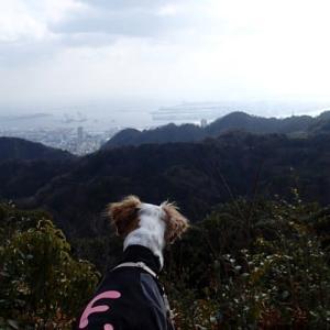 三座の頂から神戸市内ポートタワー方面を見るお散歩。