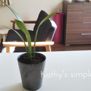 【green】観葉植物*サンスベリアの植え替え