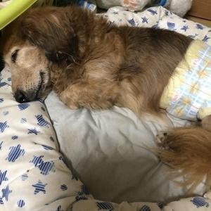 今日のレオの寝顔♪
