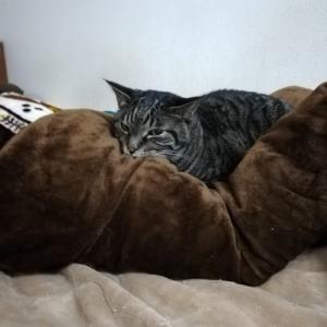 寝る方がいい、いか丸くん。