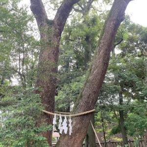 埼玉☆武蔵一宮 氷川神社⑥☆カルガモ親子と幸運の!?に遭遇 -2021.SP-