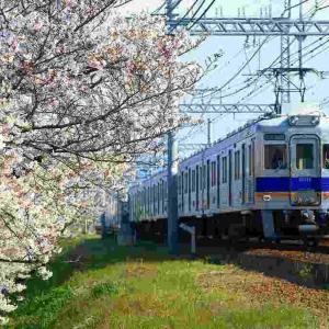 南海狭山の桜並木