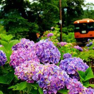 6月の大井川沿線風景!