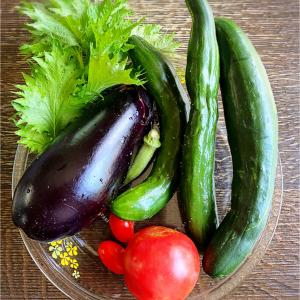 「ピーレットのやさいづくり」と畑の野菜