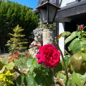 「カフェRosa薔薇館」と 英国ロイヤルスタイル展~カフェ巡り編~