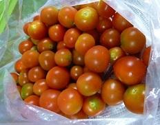 いつかまた・・トマトのお話