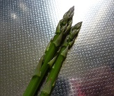 プランターで立派なアスパラガス。収穫しました。