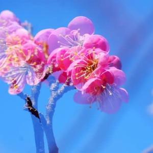 春の揺らぎ