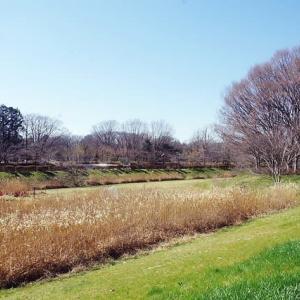 野川自然観察園―早春の花たち