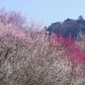 小下沢に咲く早春の花たち